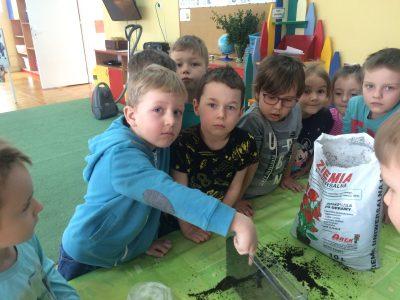 Pajacyki zakładają domowy ogródek