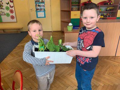 Ogródek naparapecie